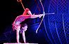 Cirque Berserk! 8th February 2016