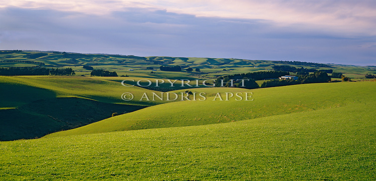 Rolling green pasture near Gore. Southland Region. New Zealand.