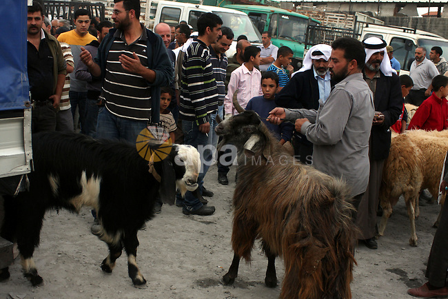 Palestinian cattle vendors sell their sheep at a market in the West Bank town of Ramallah, on 13 November 2010, in preparation for the Muslim holiday of Eid al-Adha or the Feast of Sacrifice, which marks the end of the annual pilgrimage. Photo by Issam Rimawi