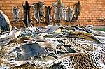 Apreensão de peles de animais pelo IBAMA. Mato Grosso. 1988. Foto de Juca Martins.