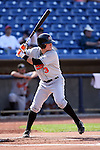 Delmarva Shorebirds 2008