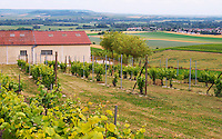 A view over the mother vines or even grand mother vines that are the source for new plants and grafts and in the background a view over the village Chouilly at the experimental vineyard of the CIVC at Plumecoq near Chouilly in the Cote des Blancs It is used for testing clones soil treatment vine treatments spraying, Champagne, Marne, Ardennes, France