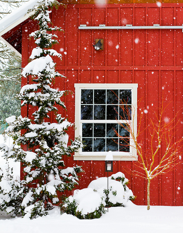 A red barn with a window in the snow with a snow covered tree in front of the barn with snow piled up in a Wintry scene reminiscent of Christmas.