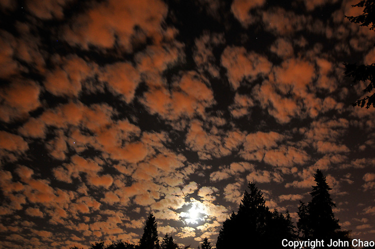 Full moon lights clouds in a night sky over silhouetted conifer trees in Newport Hills, Bellevue, Washington