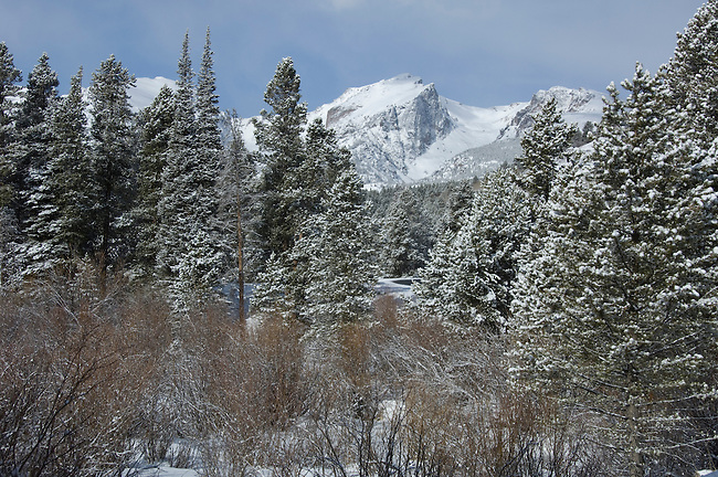 winter scene of willow wetlands, subalpine forest, and Hallett Peak, along Bear Lake Road, Rocky Mountain National Park, early spring, Colorado, USA