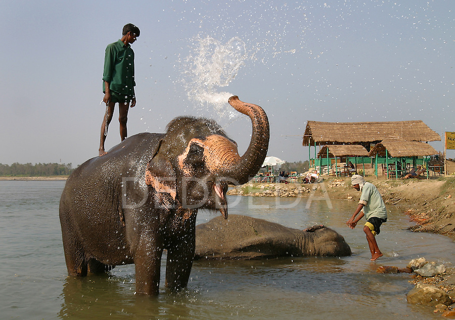 Mahouts bathe their elephants in the Rapti River at Chitwan National Park near the village of Sauraha, Nepal.