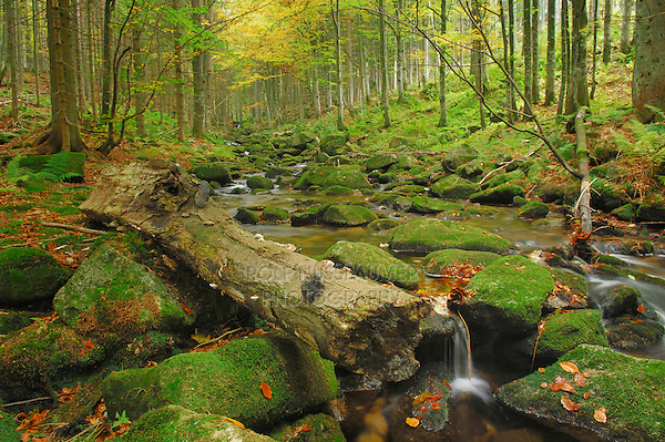 Small Ohne river, Bavarian Forest, Bavaria, Germany