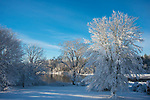 A wet spring time snow coats the trees on a sunny morning in Raynham, Massachusetts, USA.