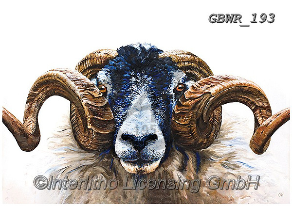 Simon, REALISTIC ANIMALS, REALISTISCHE TIERE, ANIMALES REALISTICOS, innovative, paintings+++++OliviaDeRivaz_SwaledaleRam,GBWR193,#a#, EVERYDAY