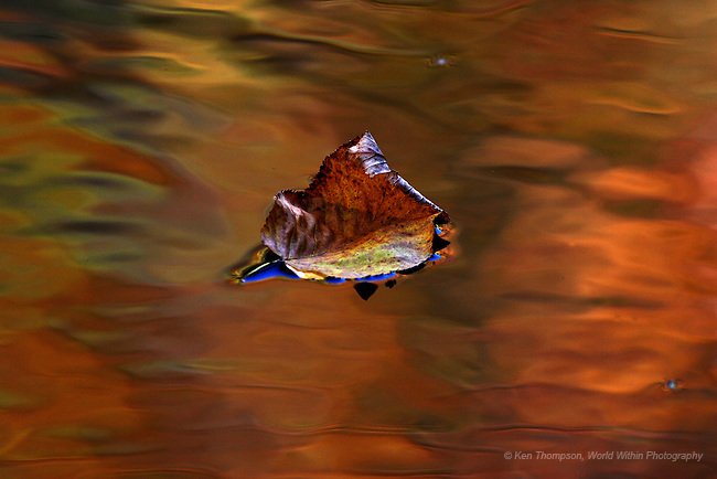 Floating Leaf, Middle Prong<br /> <br /> Leaves floating down the river over a reflection of the background fall color.  Note the reflection of the blue sky under the leaf.