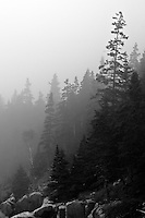 SUBJECT: Layers of pines and mist. IMAGE: A black and white of woodland veiled in coastal fog above granite outcrops offers an eerie sense of ancient events and the enduring survival of natural habitat - when it gets a chance..