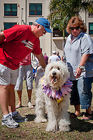 Sir Winston, a 3-year-old Golden Doodle, takes in the festive fun for four-legged friends during the Collier Spay Neuter Clinic's Fourth Annual Mardi Paws Parade and Pet Fest, at the Mercato Shopping Center, Naples, Florida, USA, Feb. 26, 2011. Photo by Debi Pittman Wilkey