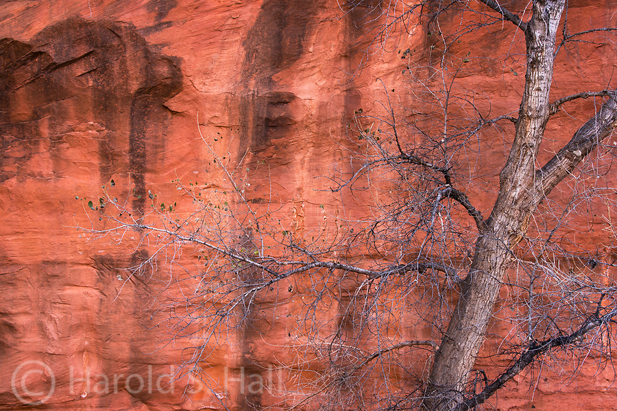 The contrast of the delicate detail of the branches and limbs seem to be in stark contrast to the bold designs of the sandstone.