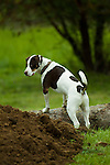 Energetic country dog