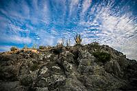 El Choyudo  playa Cactus