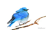 BIRDS    (Greeting Cards $3.00 ea. incl. shipping within Canada; min. order $60)