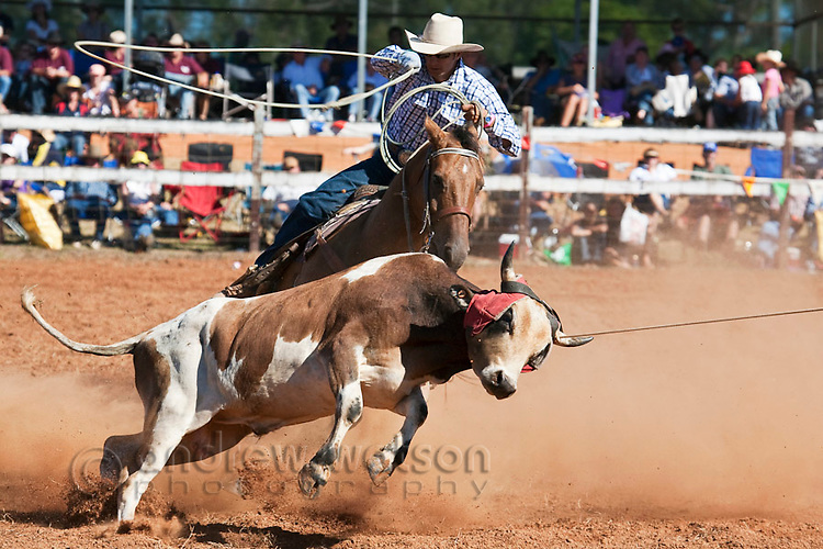 Cowboy on horseback with lasso in hand during team calf-roping competition.  Mt Garnet Rodeo, Mt Garnet, Queensland, Australia