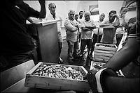Europe/Italie/Ligurie/Imperia: A la criée du port de pêche d'Imperia - Langoustines
