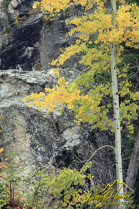Golden Aspen, granite, South Teton Creek in Alta Wyoming