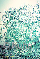 PX49-002z  Penicillin Mold - mycelium and conidiophores  100x