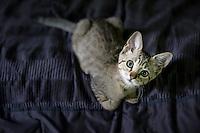 Attentive kitten looking up.