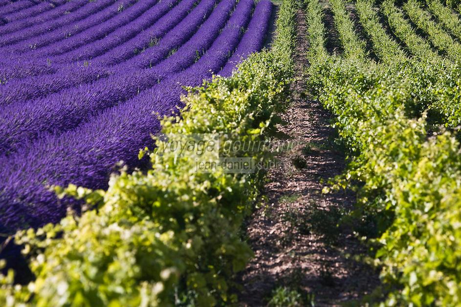 Europe/France/Rhône-Alpes/26/Drôme/Env de Grignan: Champ de Lavande et vignoble du Tricastin