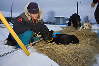 Target store sponsored *Teacher on the Trail,* Jane Blaile, from Phoenix spends time with one of the dropped dogs at Ruby on Saturday morning during Iditarod 2008