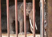 China Elephants