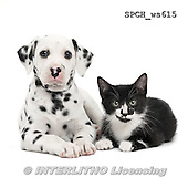 Xavier, ANIMALS, REALISTISCHE TIERE, ANIMALES REALISTICOS, FONDLESS, photos+++++,SPCHWS615,#A#