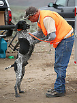 Competitor Mark Dieter, of Pixley, Ca., talks to his dog Ace during the U.S. Bird Dogs Western State Nationals in Mound House, Nev., on Friday, April 24, 2015. <br /> Photo by Cathleen Allison