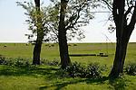 ROMANIA Banat, Firiteaz, large fields and cow herd / RUMAENIEN Banat, Firiteaz, grosse Felder und Rinderherde
