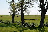 ROMANIA Banat, Firiteaz, large fields and cow herd / RUMAENIEN Banat, Firiteaz, grosse Felder und Rinderherde