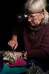 Black-footed Cat (Felis nigripes) veterinarian, Birgit Eggers, cutting neck hair to draw blood during collaring, Benfontein Nature Reserve, South Africa