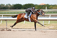 #126Fasig-Tipton Florida Sale,Under Tack Show. Palm Meadows Florida 03-23-2012 Arron Haggart/Eclipse Sportswire.