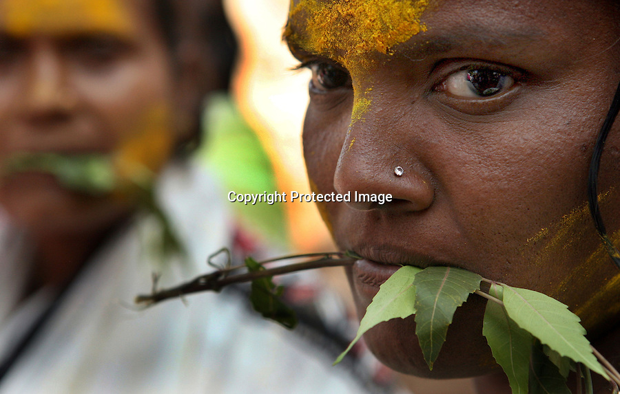 "Yellamma worshippers hold neem leaves in their mouths as a gesture of devotion to the goddess, Yellamma, during the Yellamma Jatre (fesival) in Saundatti, India.  This gesture harks back to the tradition of young girls being paraded naked except for neem leaves which were tied around their waists during their ""marriage ceremony"" to the deity, Yellamma.  The practice is now outlawed but young girls from impoverished families continue to be ""married"" to the goddess Yellamma under the darkness of night or on the girls' home.  Once they are married to Yellamma, they are regarded as servants to the goddess and must perfrom temple duties as well as satisfy the sexual needs of the priests and other men.  They may no longer marry a mortal and often end up being sold by unscrupulous priests to pimps who take them to work in the red-light districts of India's urban areas."