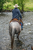 USA, Oregon, Joseph, Cowboy Todd Nash rides though Big Sheep Creek after moving cattle in the rain, Northeast Oregon