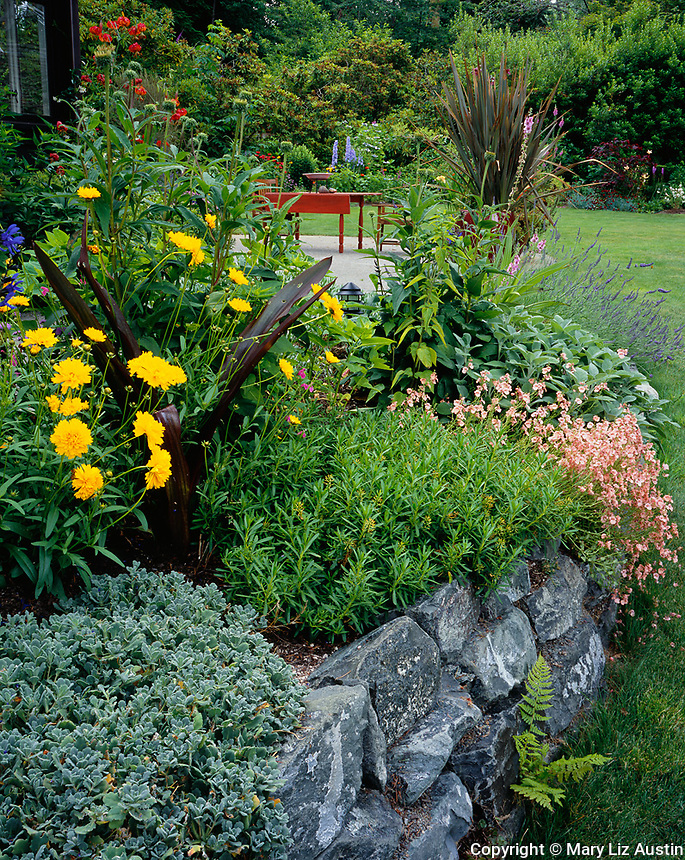 Vashon Island, WA:  A summer garden bed blooms with aubrieta, coreopsis, salvia, lilies, silver bush, and diascia near a patio surrounded by more garden beds