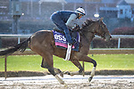 November 1, 2018: Newspaperofrecord (IRE), trained by Chad C. Brown, exercises in preparation for the Breeders' Cup Juvenile Fillies Turf at Churchill Downs on November 1, 2018 in Louisville, Kentucky. Jamey Price/Eclipse Sportswire/CSM