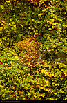 Moss Detail, Mirror Lake North Wall Trail, Yosemite National Park