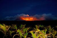 morning twilight at Puu Oo vent and the July 21 st lava flow, viewed from Kaimu beach, Kalapana, Hawaii, Big Island of Hawaii
