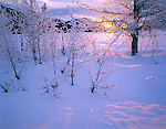 Okanogan County, WA<br /> Sunrise light on fresh snow and frosted branches in the Methow Valley near Mazama
