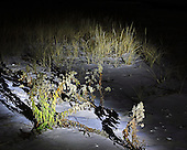 Visions and sights from a late night walk near Barnegat. Available as a Limited edition Fine Art Print printed to conservation standards by a Master Printer specializing in gallery/museum archival prints.