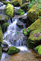 A series of small waterfalls flow down the mountain and over rocks in the Chimneys Area of Great Smoky Mountains National Park