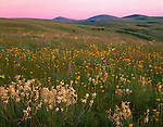 Wallowa County, OR  <br /> Pink twilight sky over the rolling hills and flowering meadows of Zumwalt Prairie with Findley Buttes in the distance