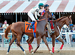 Chasing Yesterday in the post parade as Sippican Harbor (no. 6) wins the Spinaway Stakes (Grade 1), Sep. 1, 2018 at the Saratoga Race Course, Saratoga Springs, NY.  Ridden by  Joel Rosario, and trained by Gary Contessa, Sippican Harbor finished 2 lengths in front of Restless Rider (No. 11).  (Bruce Dudek/Eclipse Sportswire)