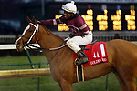 November 29, 2019 : Finite (#1, Ricardo Santana Jr., jockey) wins the76th running of the Golden Rod Stakes at Churchill Downs, Louisville, Kentucky. Trainer Steven M. Asmussen, owner Winchell Thoroughbreds LLC (Ron Winchell), Thomas J. Reiman, William Dickson, and Deborah A. Easter. By Munnings x Remit (Tapit). Mary M. Meek/ESW/CSM