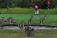 Golf course with Kangaroos.  More info on releases.