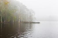 Fog-County Dock