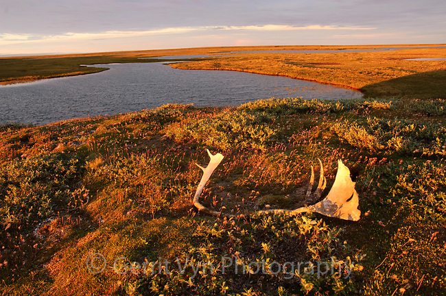 Hunters from seven native communities rely on the Teshekpuk caribou herd for subsistence.