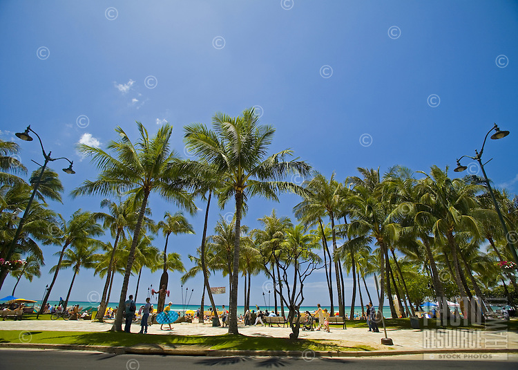 Palm lined Kuhio Beach, Waikiki, Hawaii, seen from the land side